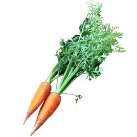 わっさんの食いしん坊野菜|にんじん