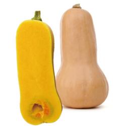 バターナッツ|わっさんの食いしん坊野菜