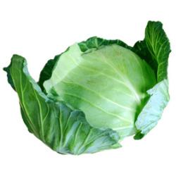 キャベツ|わっさんの食いしん坊野菜