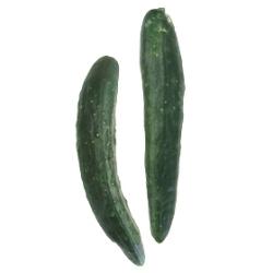 きゅうり|わっさんの食いしん坊野菜