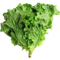 グリーンリーフ|わっさんの食いしん坊野菜