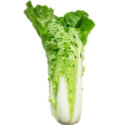 ミニ白菜|わっさんの食いしん坊野菜