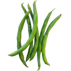 インゲン|わっさんの食いしん坊野菜