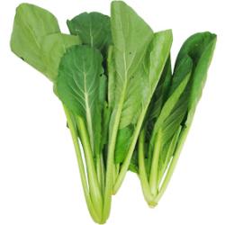 小松菜|わっさんの食いしん坊野菜