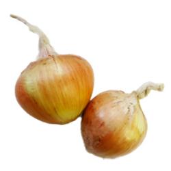 玉ねぎ|わっさんの食いしん坊野菜