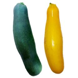 ズッキーニ|わっさんの食いしん坊野菜