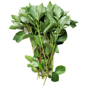 モロヘイヤ|わっさんの食いしん坊野菜