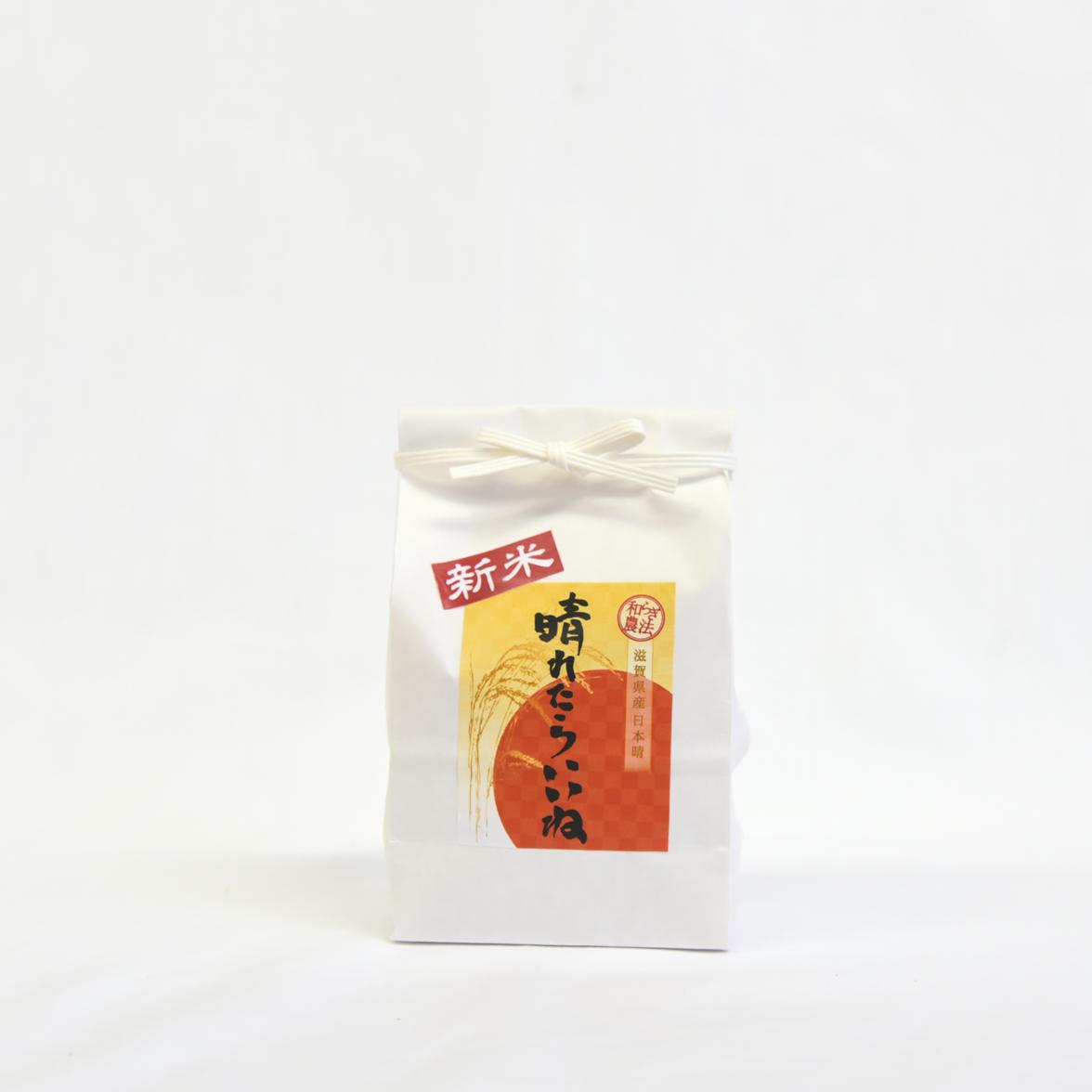 日本晴 投入7日目